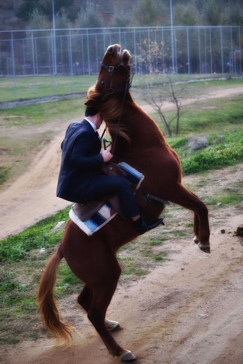 6-horse-wedding-photos-02
